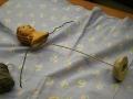 20121202-vanoce-tojicky-betlem-img_7426-foto-jiri-berousek